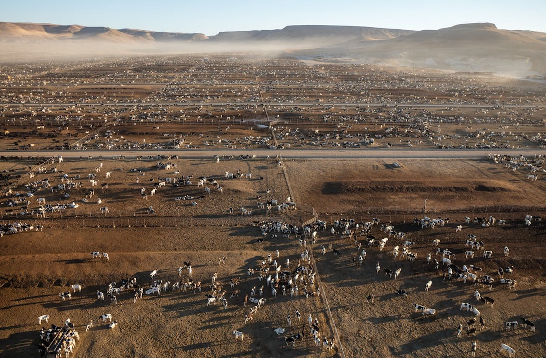 Factory Farming : Feedlots