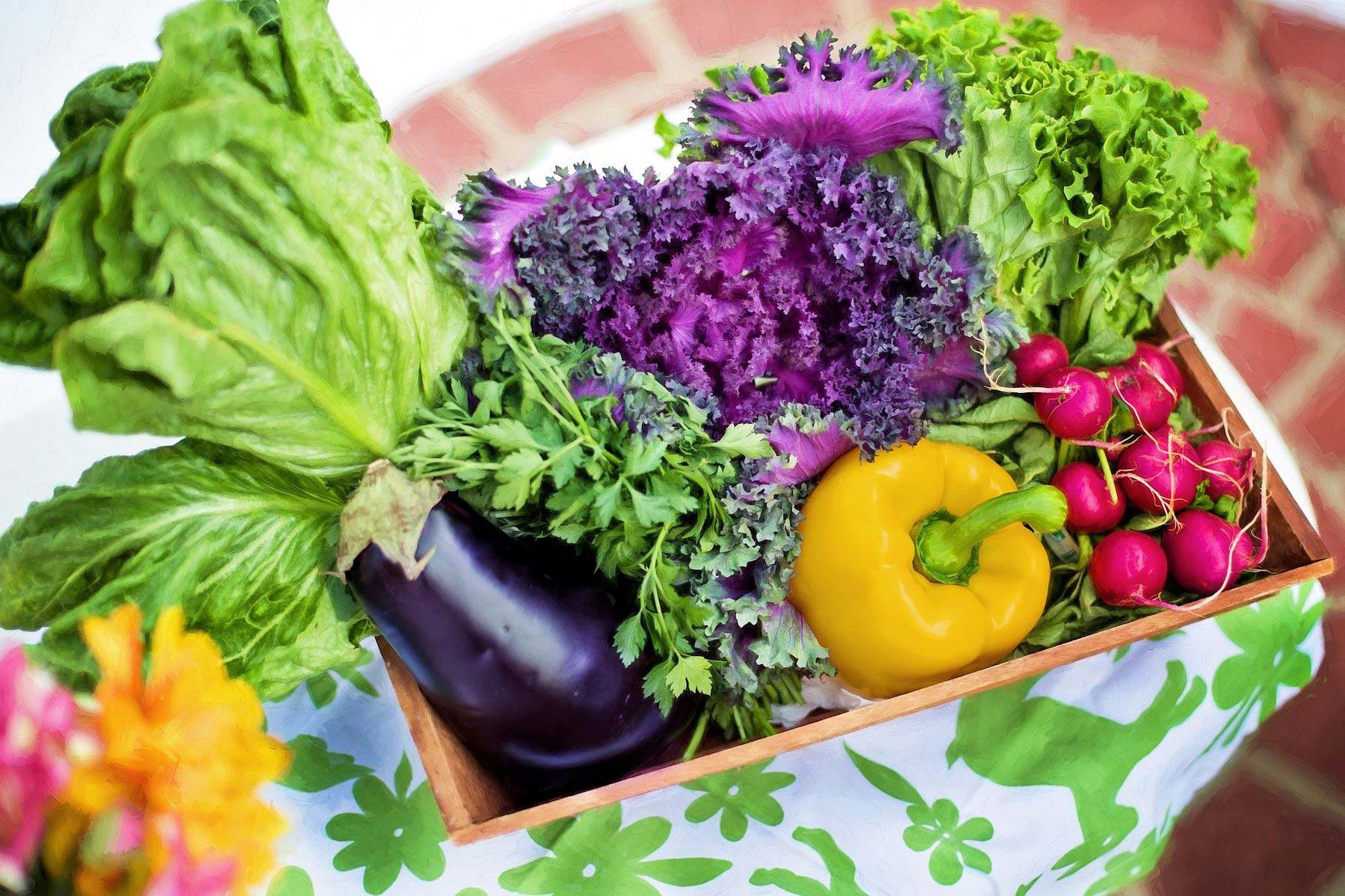 Vegan Plant-Based Diet For Weight Loss