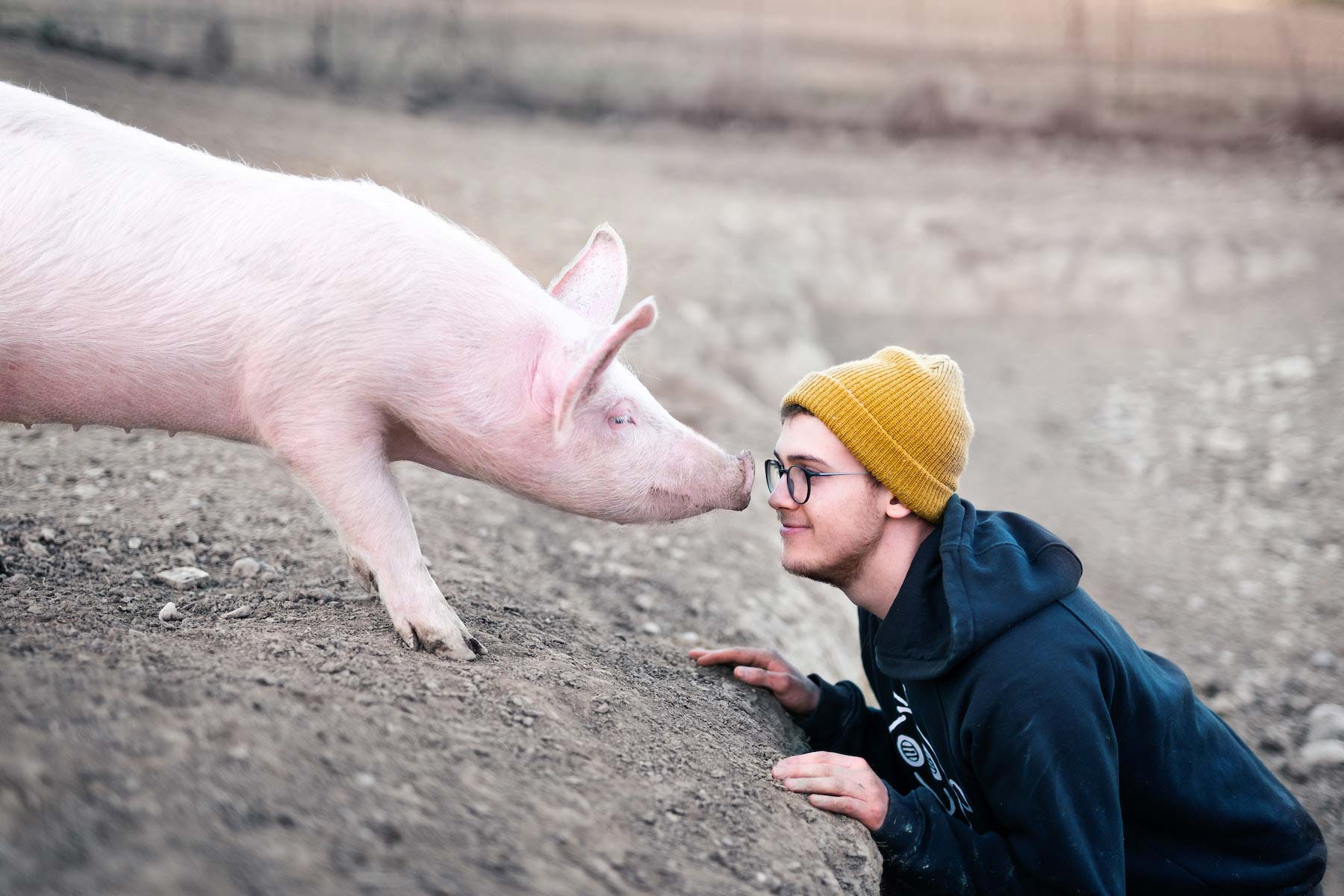 pig and human