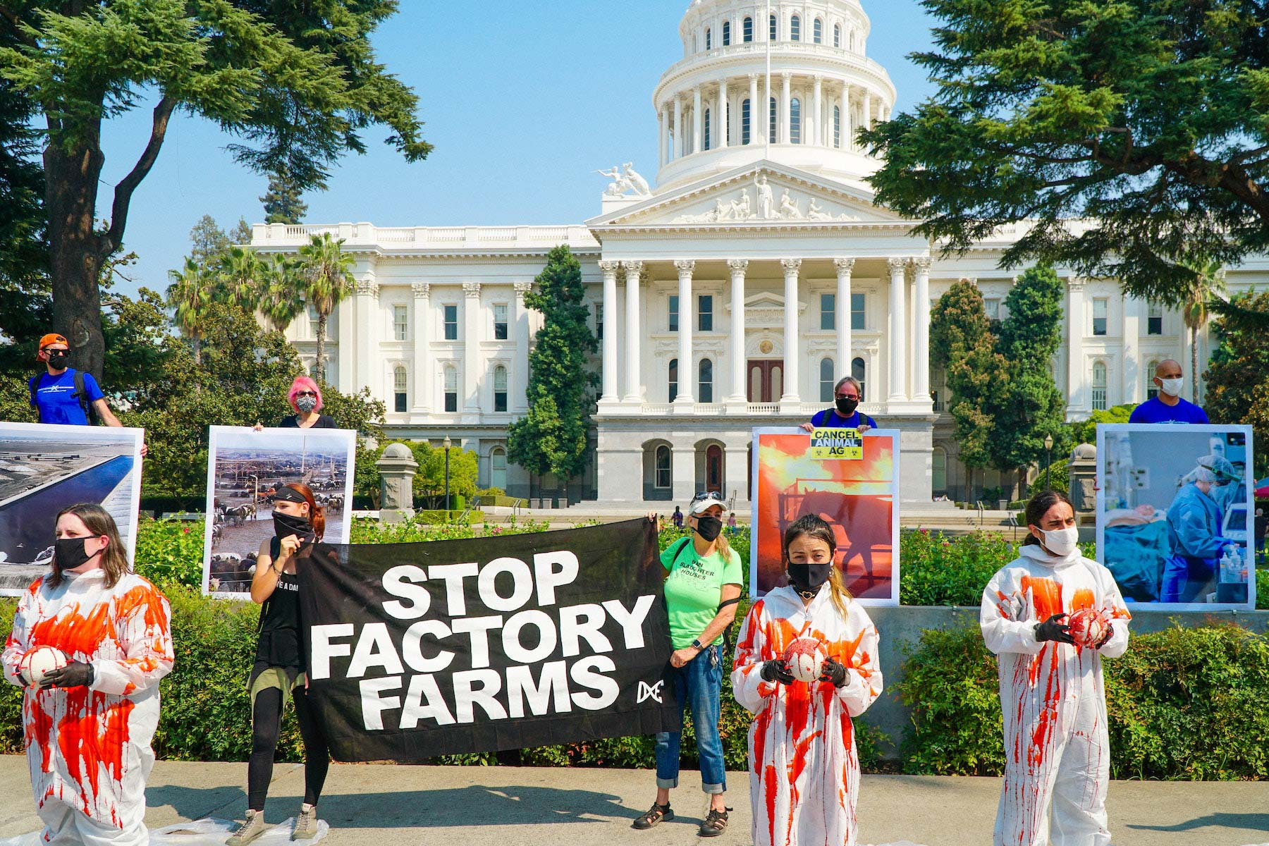 stop factory farms : animal rights demonstration