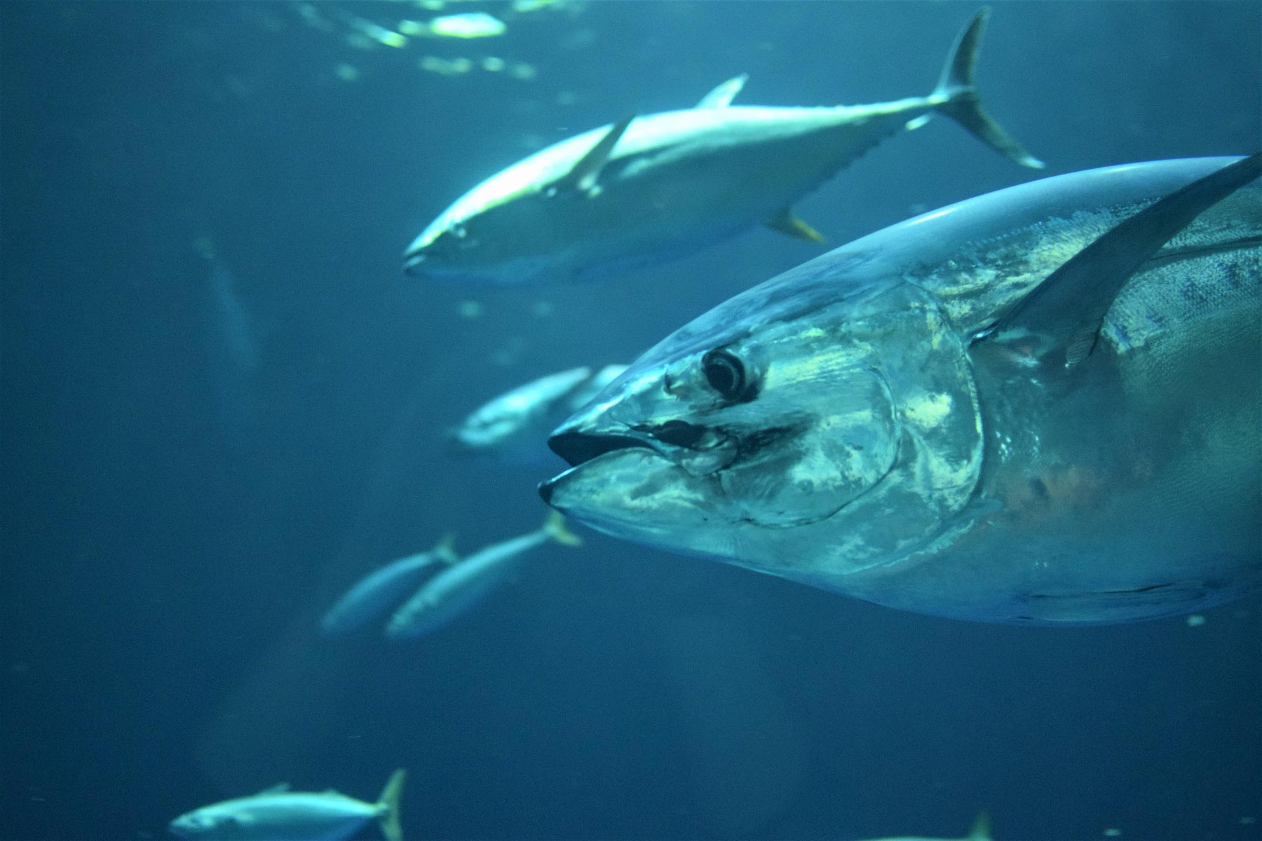 Bycatch is a treat for marine animals