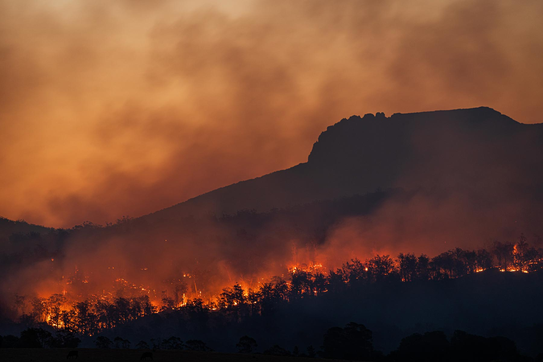 wildfires climate change