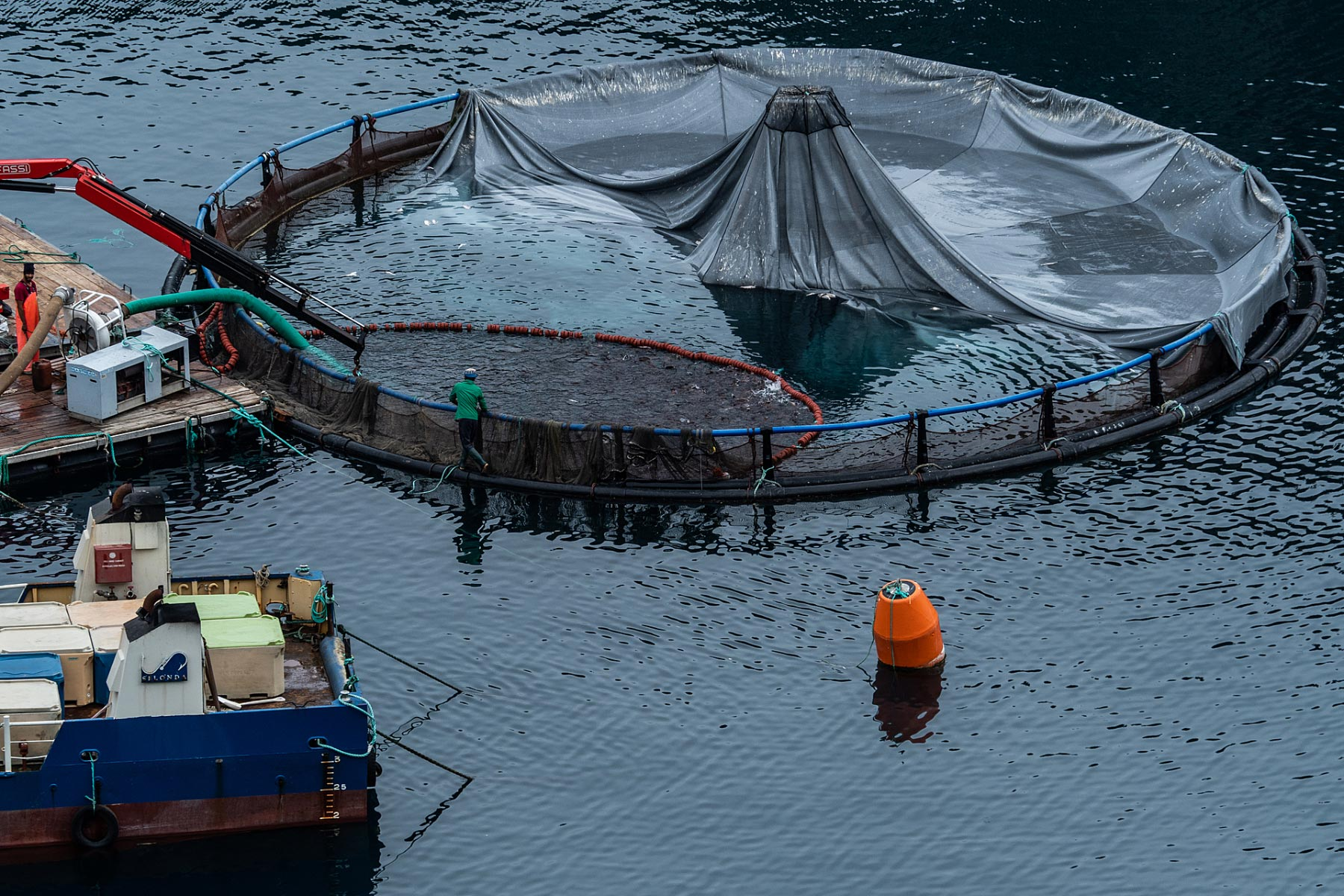 With a focus on gilt-head sea bream and European sea bass, Greece is known worldwide for its extensive aquaculture and commercial fishing industries. Fish farms discharge high levels of harmful pollutants, leading to algal blooms and dead zones and contaminating the water supply. They are also breeding grounds for disease, which can spread to native fish populations. Not only are the fish farms in Greek coastal sea and bay ecosystems damaging the local ecosystems, but they are forcing hundreds of thousands of fish inside overcrowded cages, just to be killed en masse using temperature shocks to maintain the fast pace of the production chain.